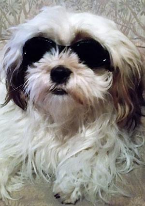 Laserbril hond